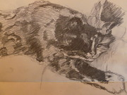Hand drawing of Molly the cat, in Suffolk