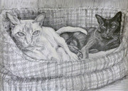 hand drawing of burmese cats in a basket