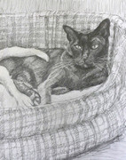 drawing of a burmese cat in a basket